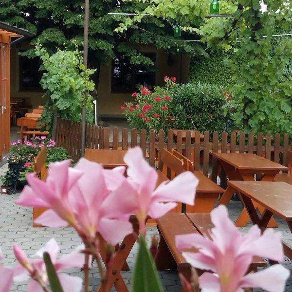 Garten mit Oleander