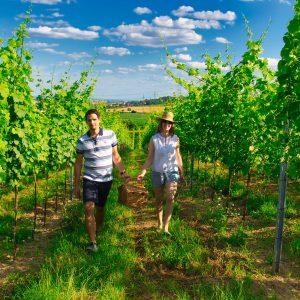 Spaziergang im Weingarten